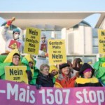 epa04055917 People protests against the authorization of gentically modified (GM) maize with signs and banners reading'Stop GMO Maize 1507 ', 'Only a NO can protect us' and 'No to GMO Maize 1507' in front of the Federal Chancellor's Office in Berlin, Germany, 05 February 2014. The protesters demand the federal government to vote against the authorization in Brussels. Otherwise the GM maize, produced by US company DuPont-Pioneer could be cultivated in the whole European Union.  EPA/JOERG CARSTENSEN